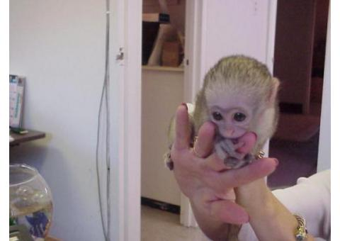 Adorable baby capuchin squirrel and marmoset monkeys ready for good